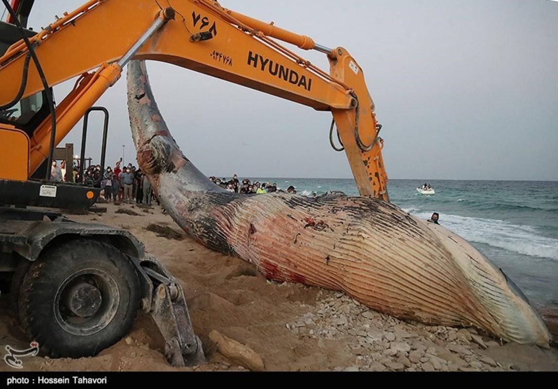 مرگ نهنگ