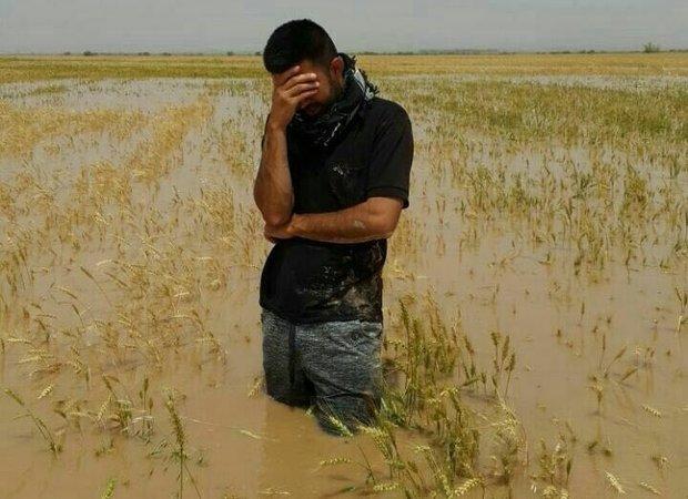 خسارت سیل به مزارع گندم