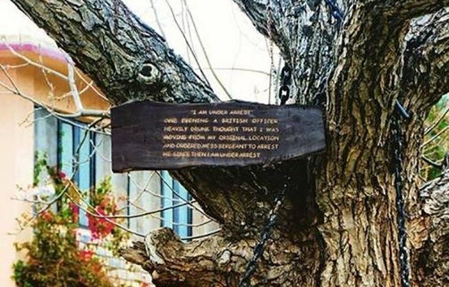 دستگیری درخت